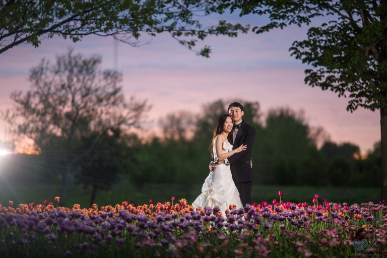 Holland Michigan tulip fields nighttime trash the dress wedding photographs