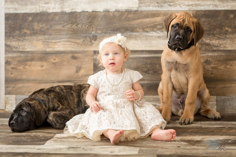 18 month session with dogs Grand Ledge michigan