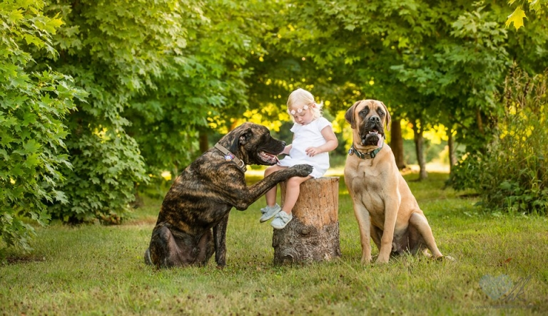 Grand Ledge toddler photographs outdoors with dogs