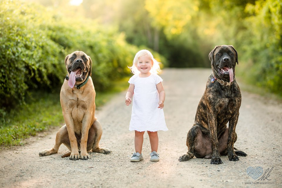 Toddler session with bull mastiff